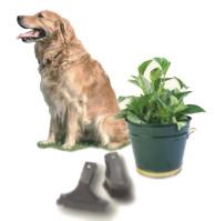 Чистые домашние животные, растения и одежда